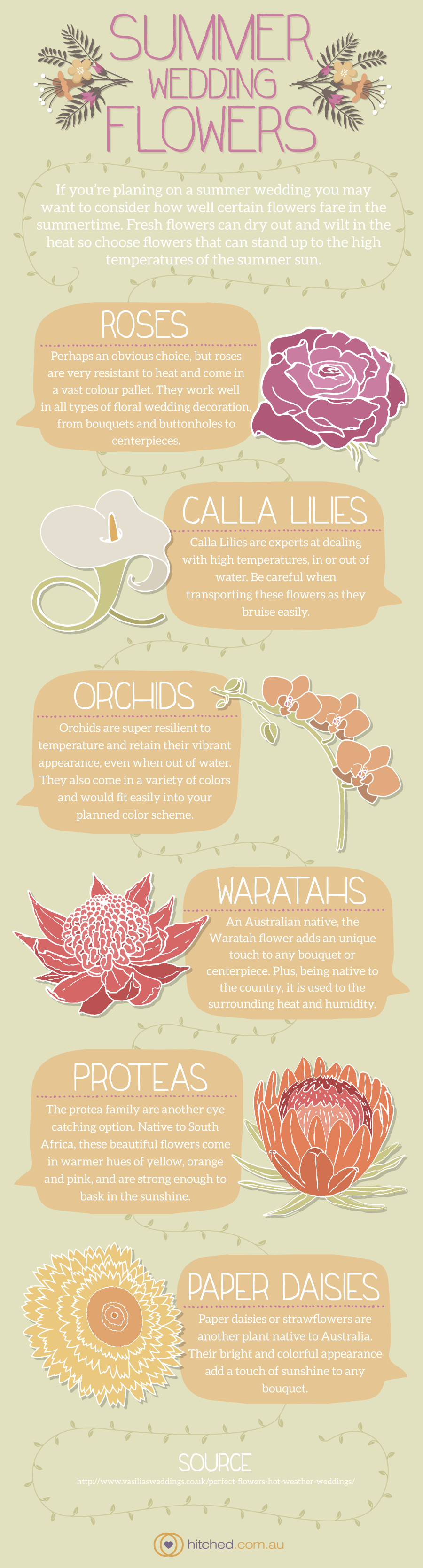 Summer wedding flowers infographic for hitched.com.au #infographic #wedding #flowers