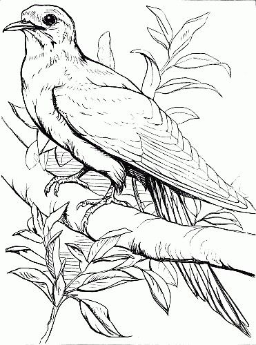 outline drawing of a bird on a branch