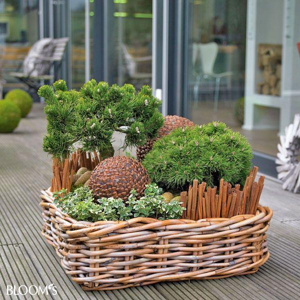 Bepflanzungen Fur Balkon Und Terrasse Im Winter Garten Garten