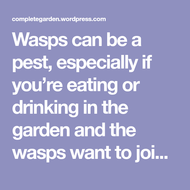 Wasps can be a pest, especially if you're eating or drinking in the garden and the wasps want to join in. You can make your own bee safe wasp trap without attracting and killing bees in the p…