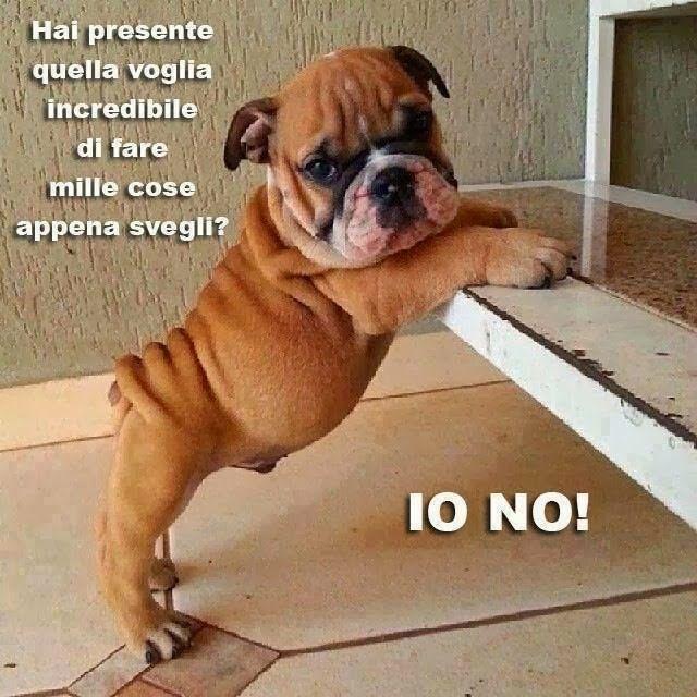 Cani Buongiorno Divertenti Hai Presente Quando Impara A Parlare