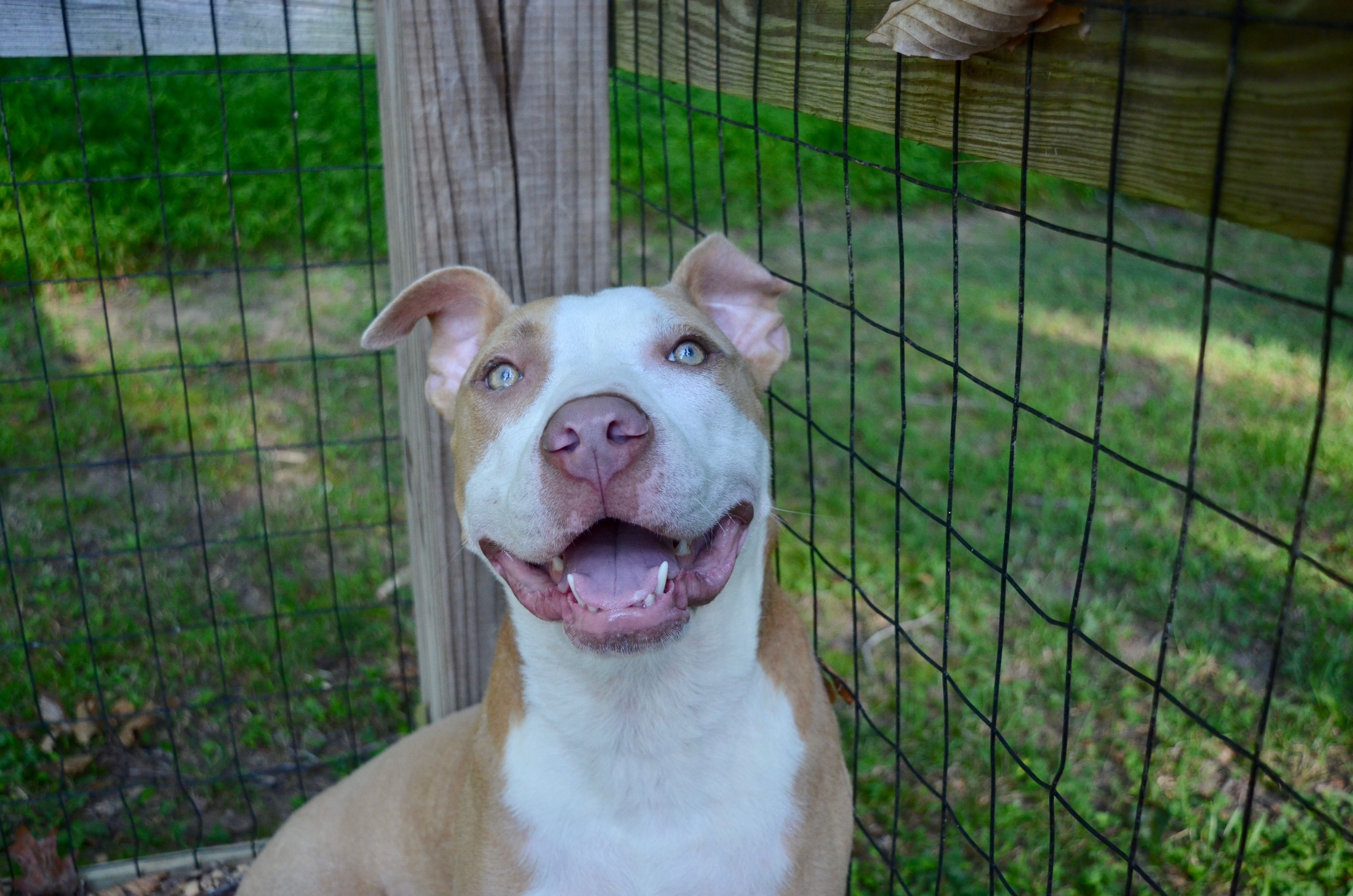Chyna is an adoptable Dog Terrier searching for a