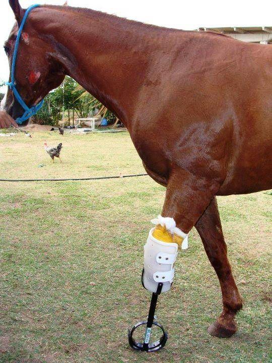 Equine Prosthetics