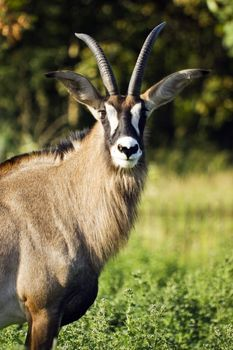 An Exhaustive List Of African Animals With Some Stunning
