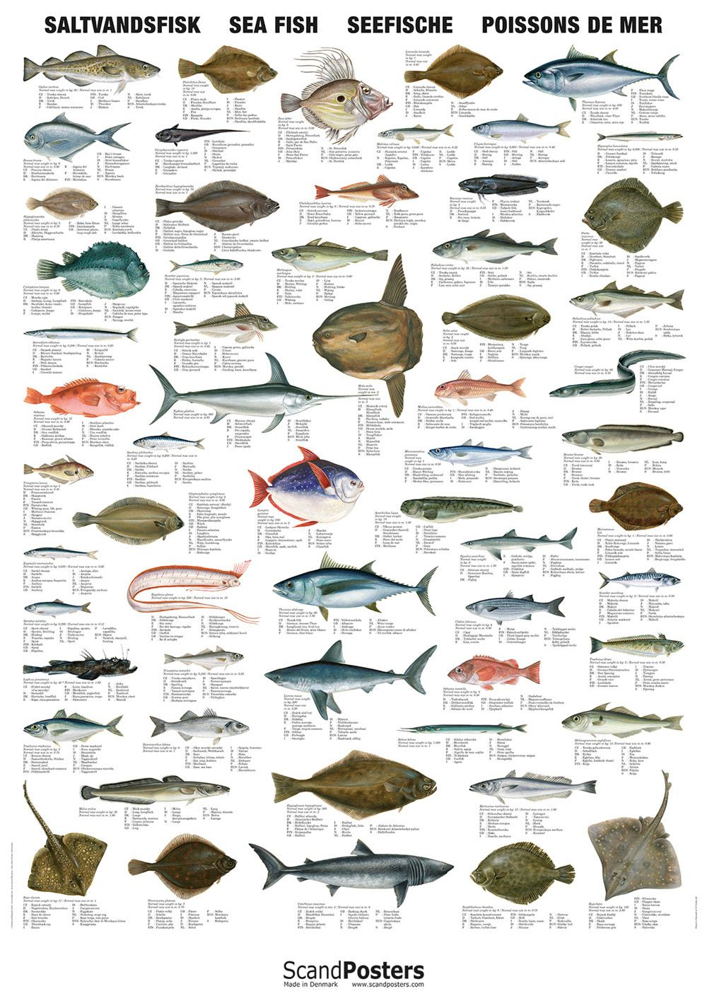 Saltwater Fish Chart Saltvandsfisk Seefische In 2020 Fish Chart Types Of Fish Sea Fish