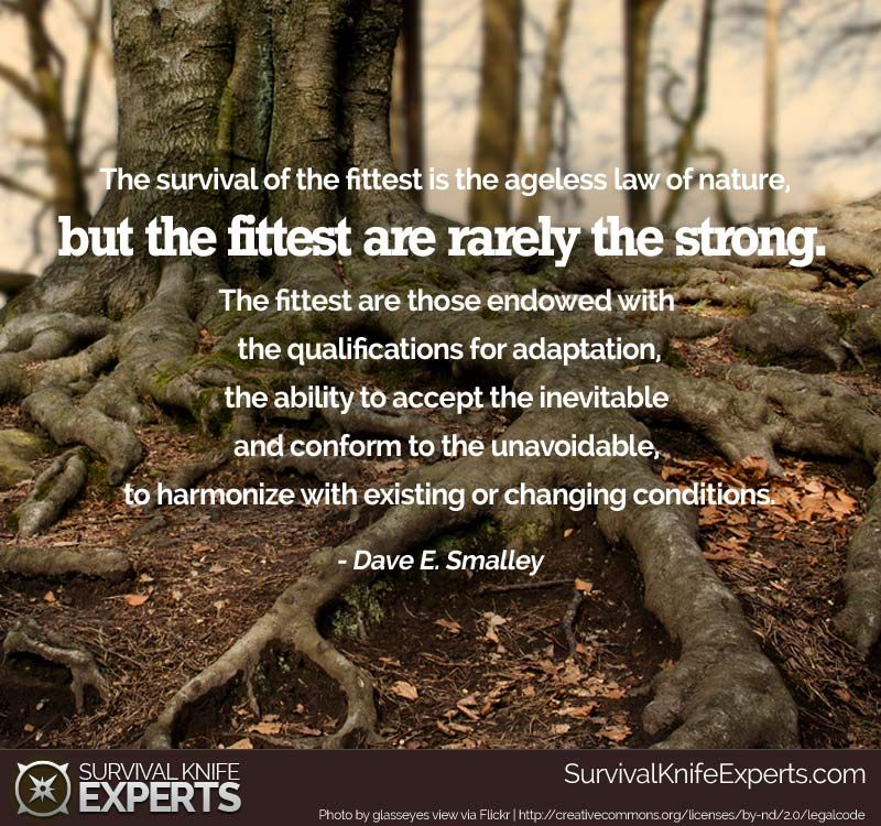The Survival Of The Fittest Is The Ageless Law Of Nature But The Fittest Are Rarely The Strong The Fittest Are Those End Survival Quotes Survival Best Quotes