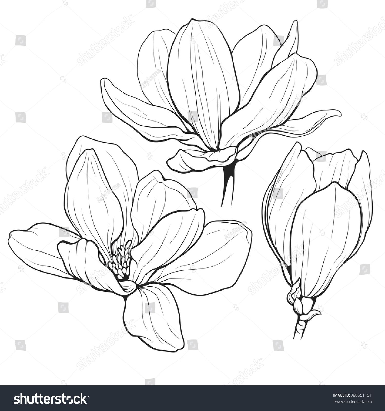 Black And White Line Illustration Of Magnolia Flowers On A White Background Flower Line Drawings Flower Drawing Flower Sketches