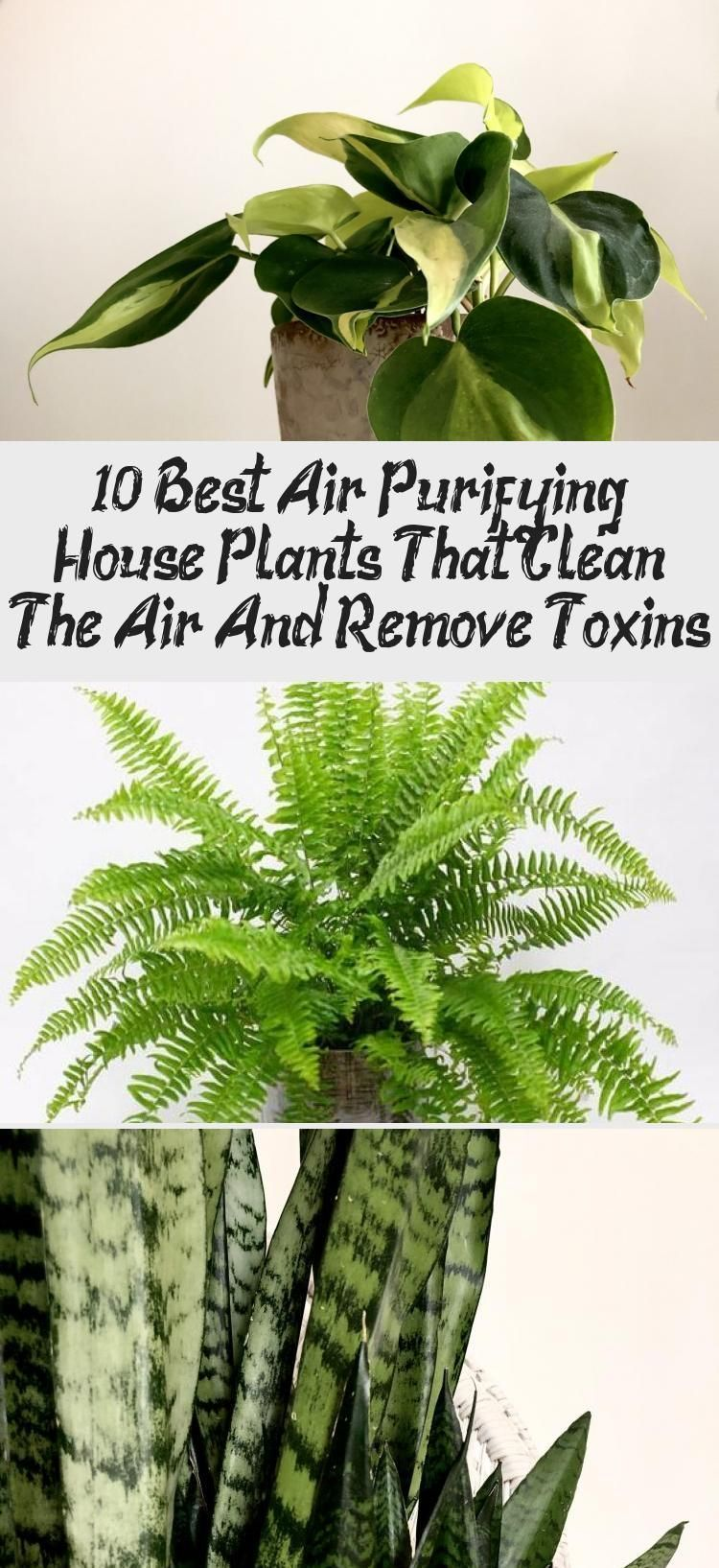10 Best Air Purifying House Plants That Clean The Air And ...