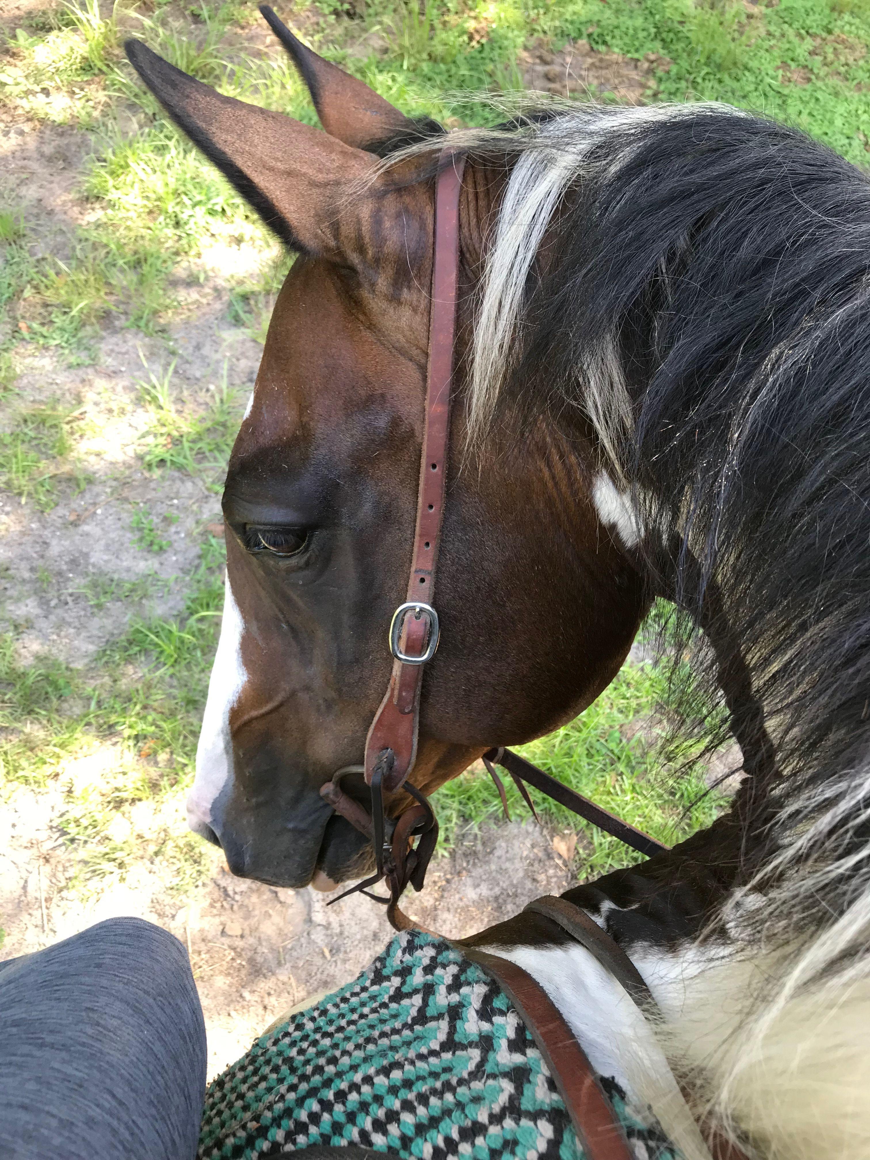 The Horse Geek
