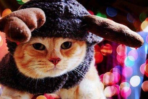 Котенок и щенок: наряды для друзей