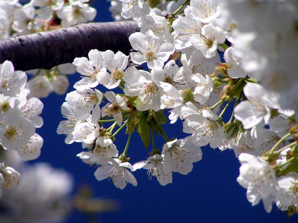 Darmowe Tapety Na Kompa Makro Kwiaty Http Wallpapic Pl Krajobrazy Makro Kwiaty Wallpaper 41185 Spring Flowers Flowers Spring