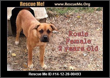 Boxertown ― Alabama Boxer Rescue ― ADOPTIONS ― RescueMe