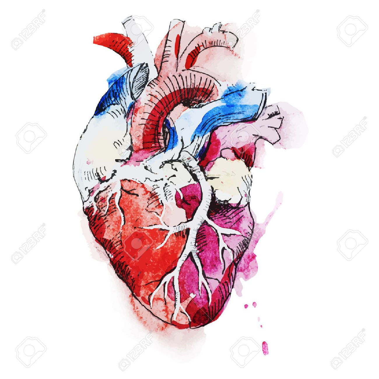 41907318-Beautiful-vector-image-with-nice-watercolor-human-heart ...