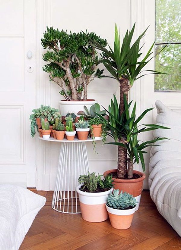 40 Smart Mini Indoor Garden Ideas Bored Art Plants Indoor Plants Indoor Gardens