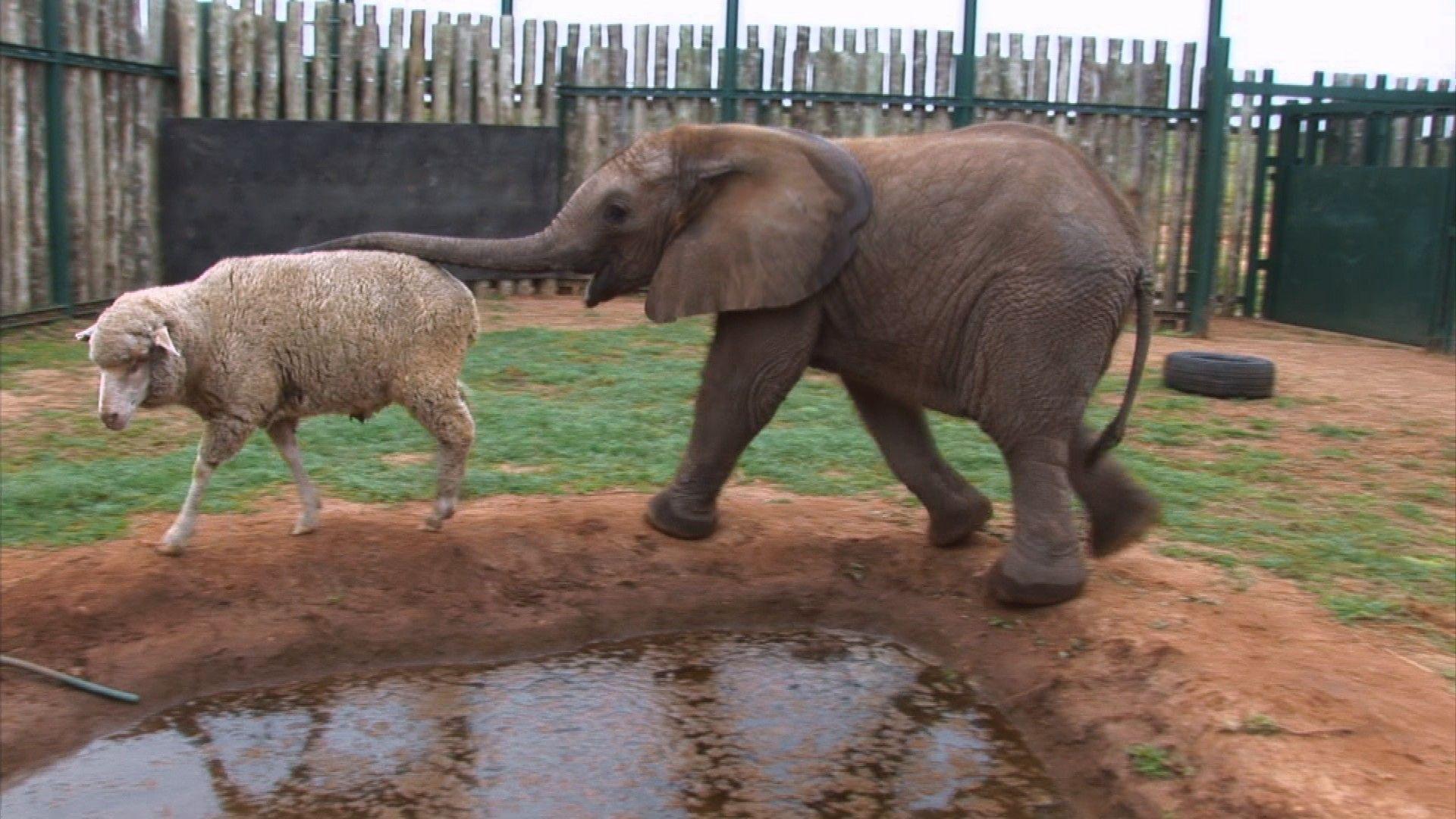 25 Strange But Cute Animal Friendships – Mutually