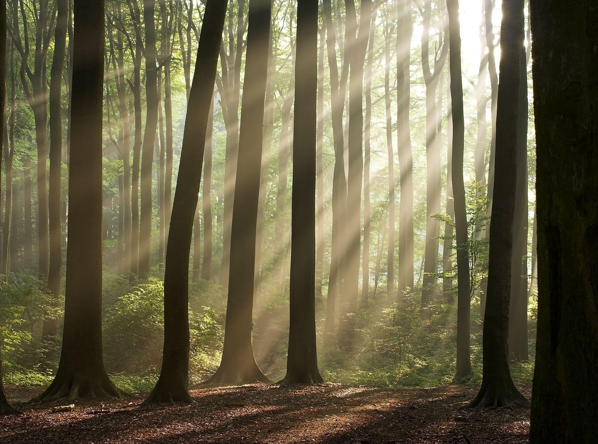 Fotos beeld natuur bos bomen zon wallpaper wallpapers