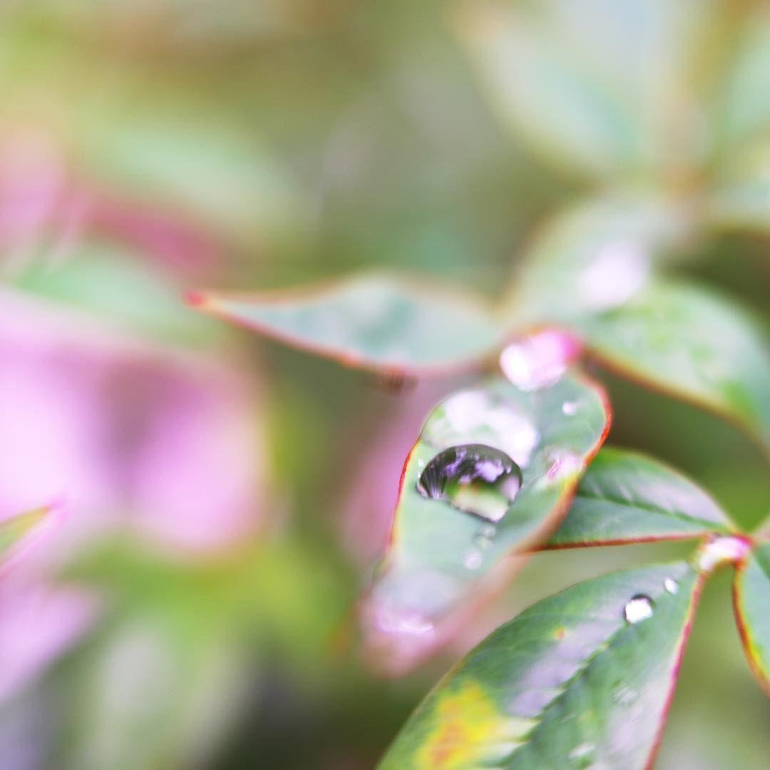 小さな滴が集まって大きな滴になった。