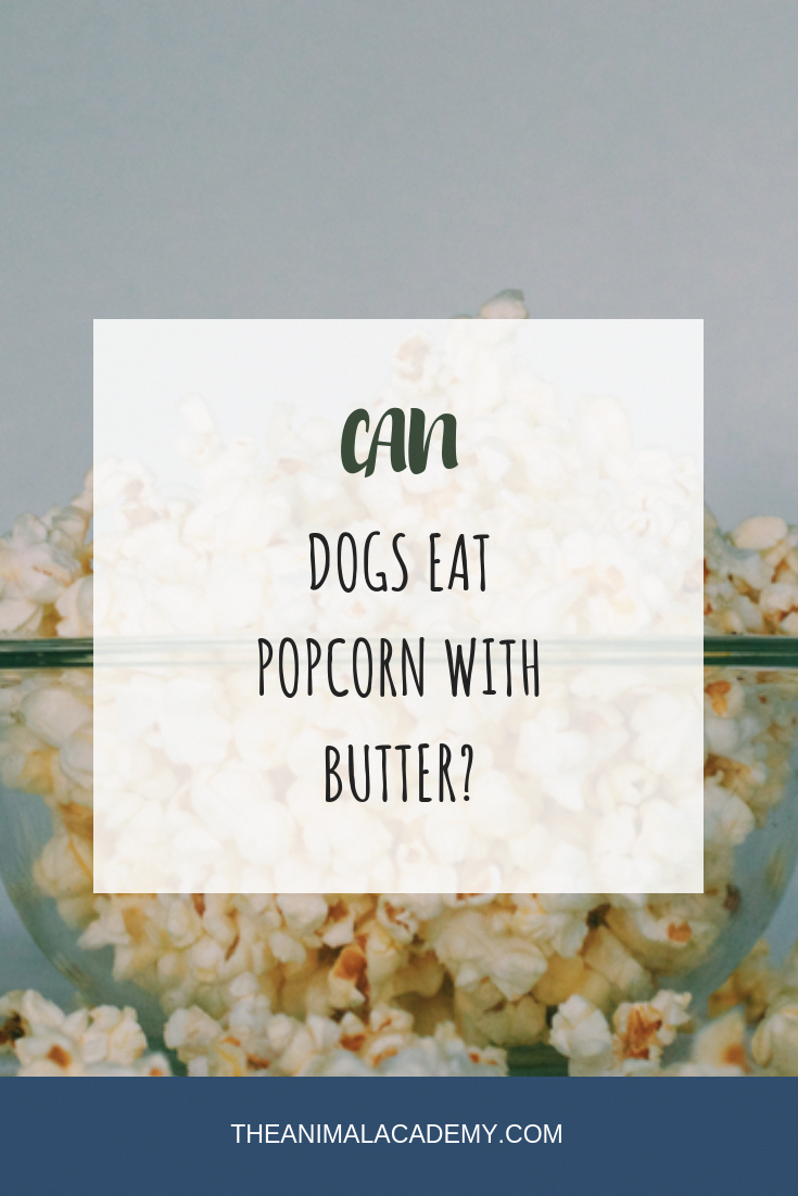 Can dogs eat popcorn with butter? What do dogs eat? What