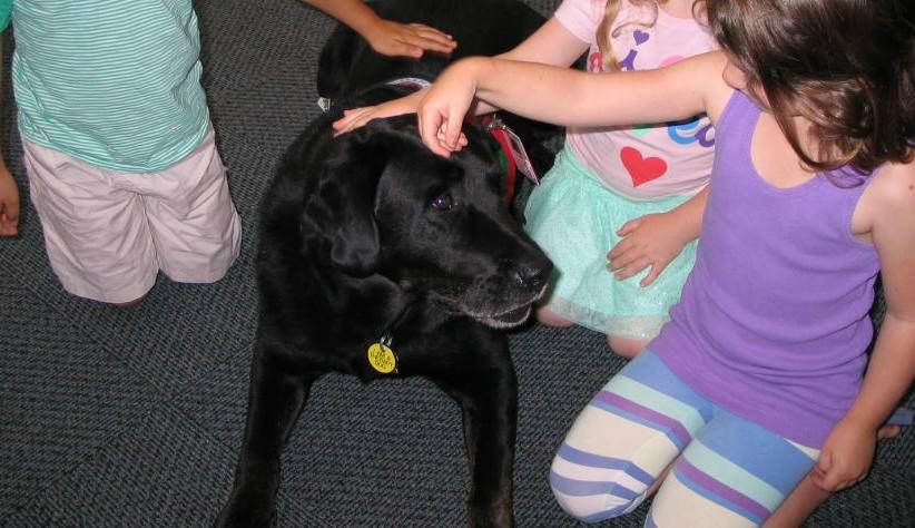 https://flic.kr/p/wbnHSa | Animal Heroes Part 1 - July 8, 2015 | At the end of the presentation, Auggie sat patiently and let kids pet him.  July 8, 2015.