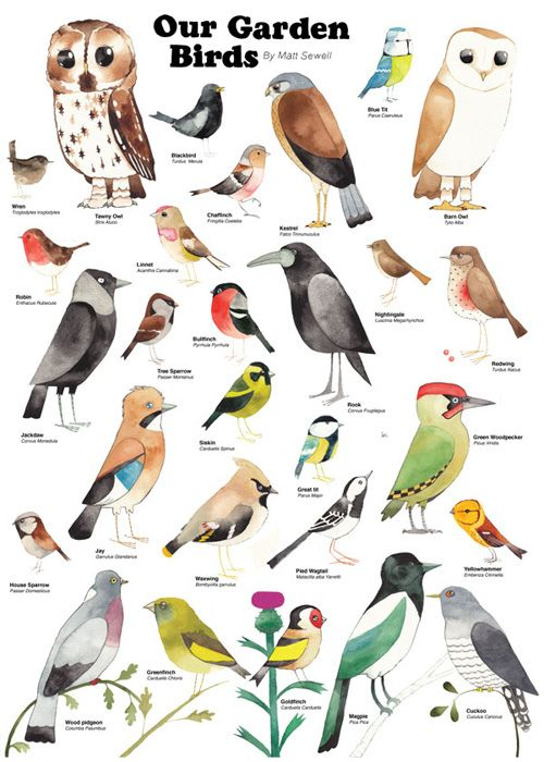 You Might See Some Of These During RSPB Big Garden Birdwatch Pinittowinit