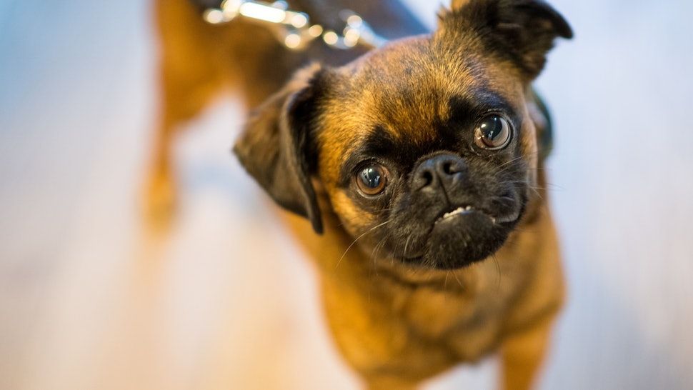 15 Best Dog Breeds For People Who Work Full Time Low Maintenance Dog Breeds Dog Breeds Best Dog Breeds