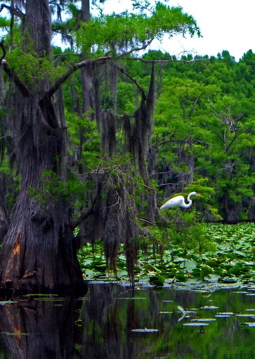 Caddo Lake State Park in Texas, USA (by Caverguy).