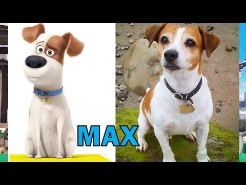 Did You Know That You Can Shop For All Of Your Pets Needs Here At These Online Super Shopping Malls With Over 4000 S Pets Movie Secret Life Of Pets Dog Movies