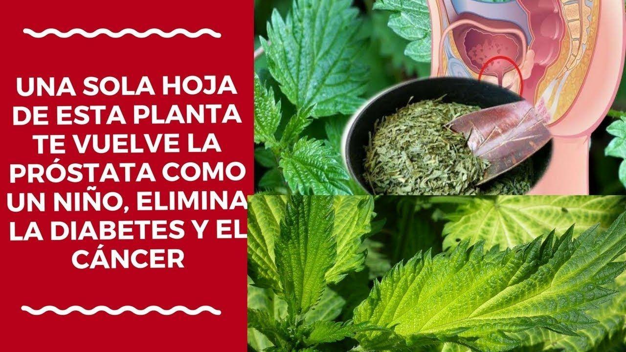 plantas para reducir la prostata