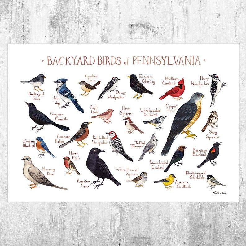 Oiseaux De Basse Cour Pennsylvanie Field Guide Art Print Etsy Backyard Birds Bird Poster Painted Bunting