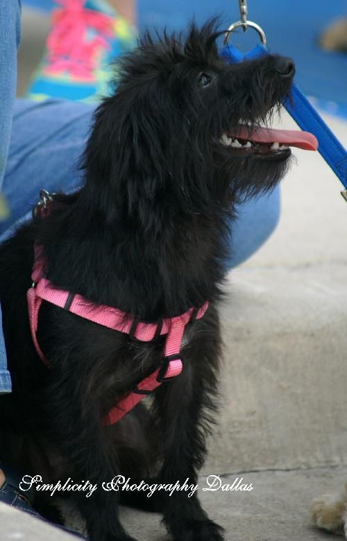 Tilly Dallas Pets Alive! Pets, Dog adoption, Dogs