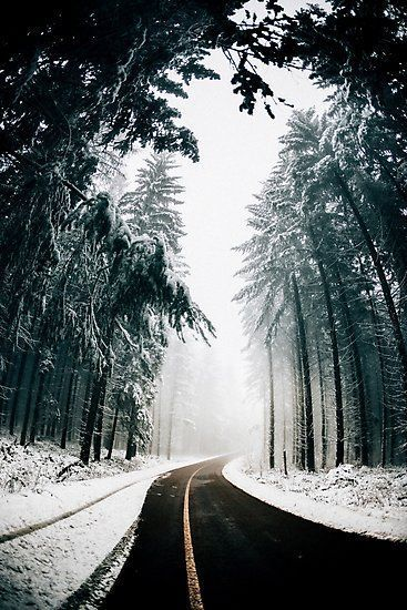 Photo of Winter Wonderland | Photographic Print – #Photographic #Print #winter #Wonderlan…