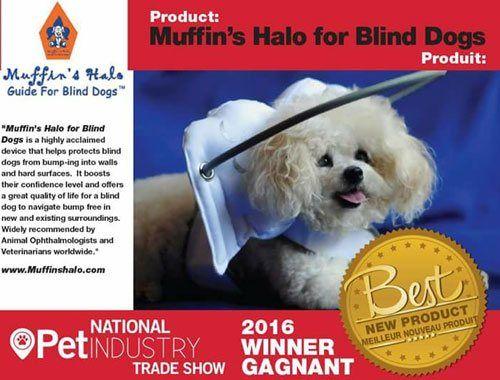 Blind Dog Harness