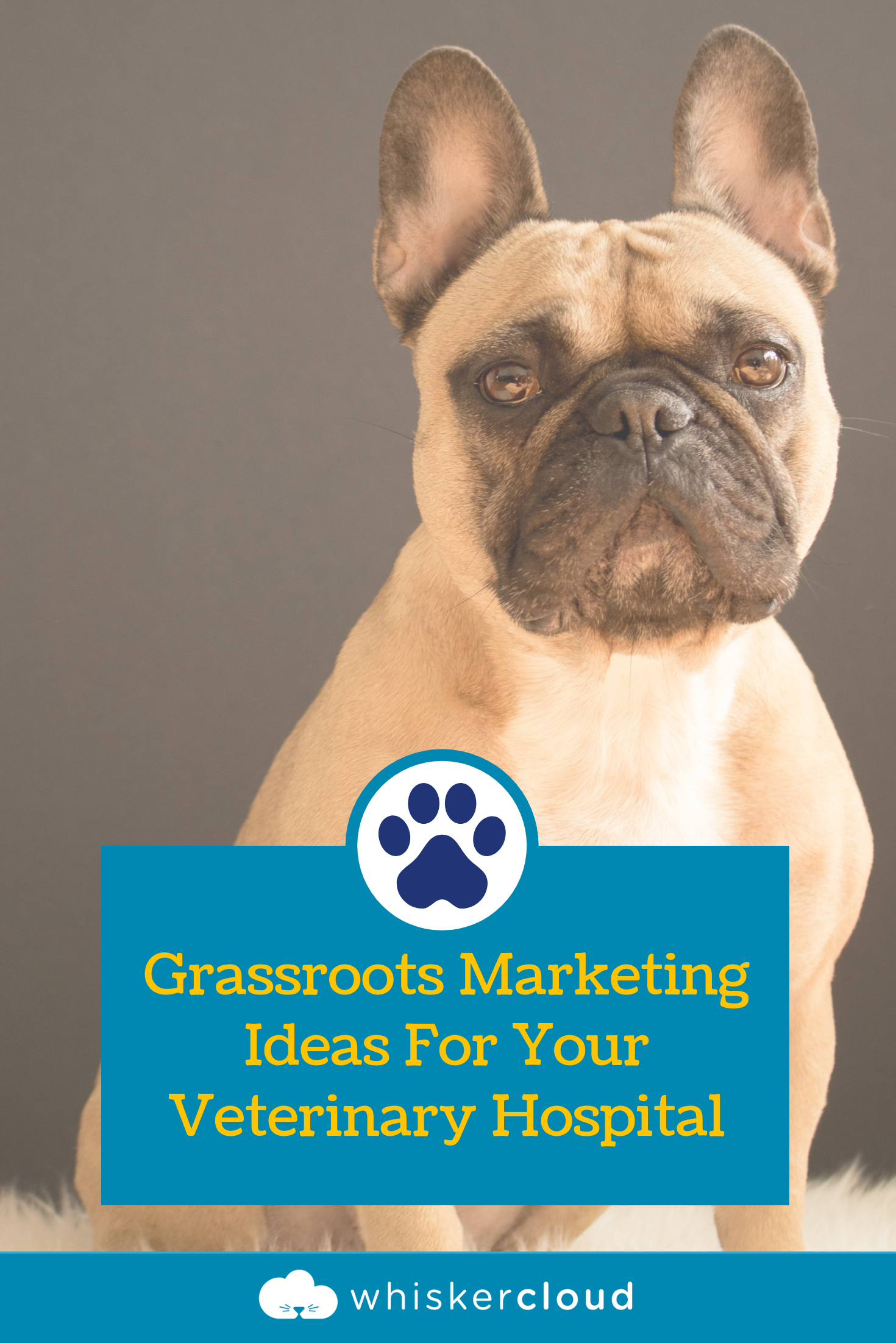 Grassroots Marketing Ideas For Your Veterinary Hospital Veterinary Hospital Hospital Marketing Grassroots Marketing