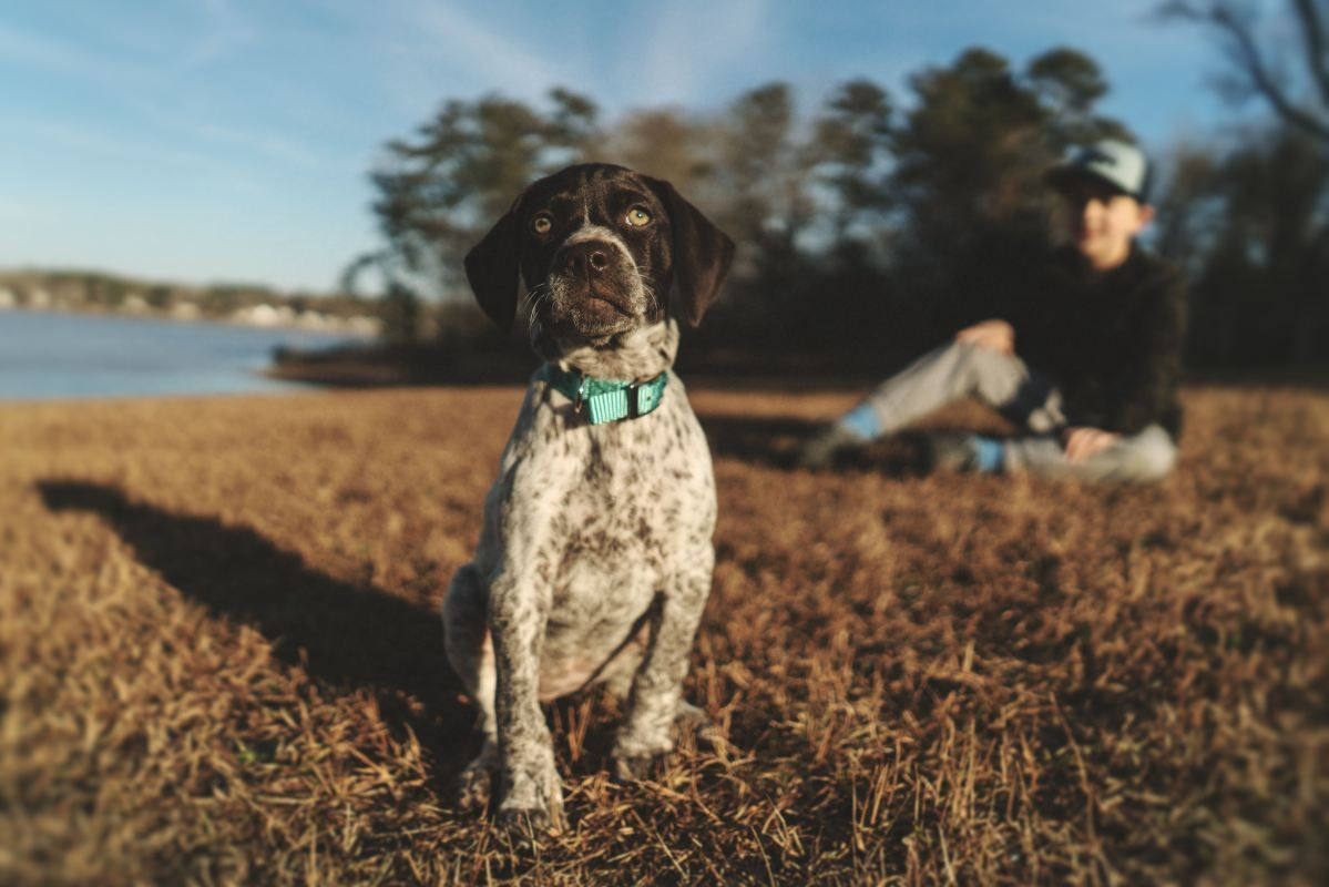 Many people fail at dog training since they haven't
