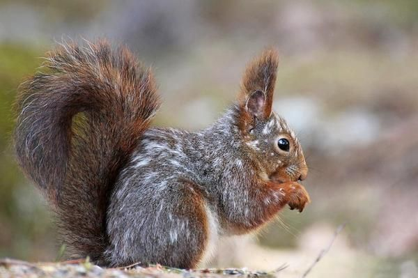 squirrel_spots_pia2@large.jpg (600×399)
