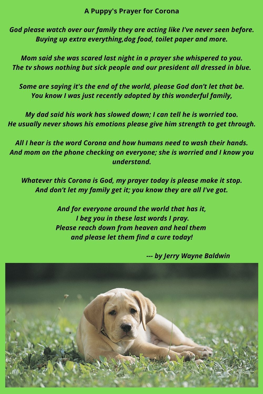 A Puppy S Prayer For Corona In 2020 Dogs Dog Food Delivery Puppies
