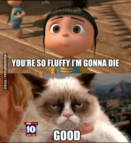 Agnes fell in love with Grumpy Cat!