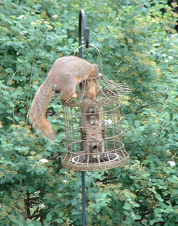 Diy Squirrel Proof Bird Feeder Pole Bird Feeders Bird Feeder Poles Squirrel Proof Bird Feeders
