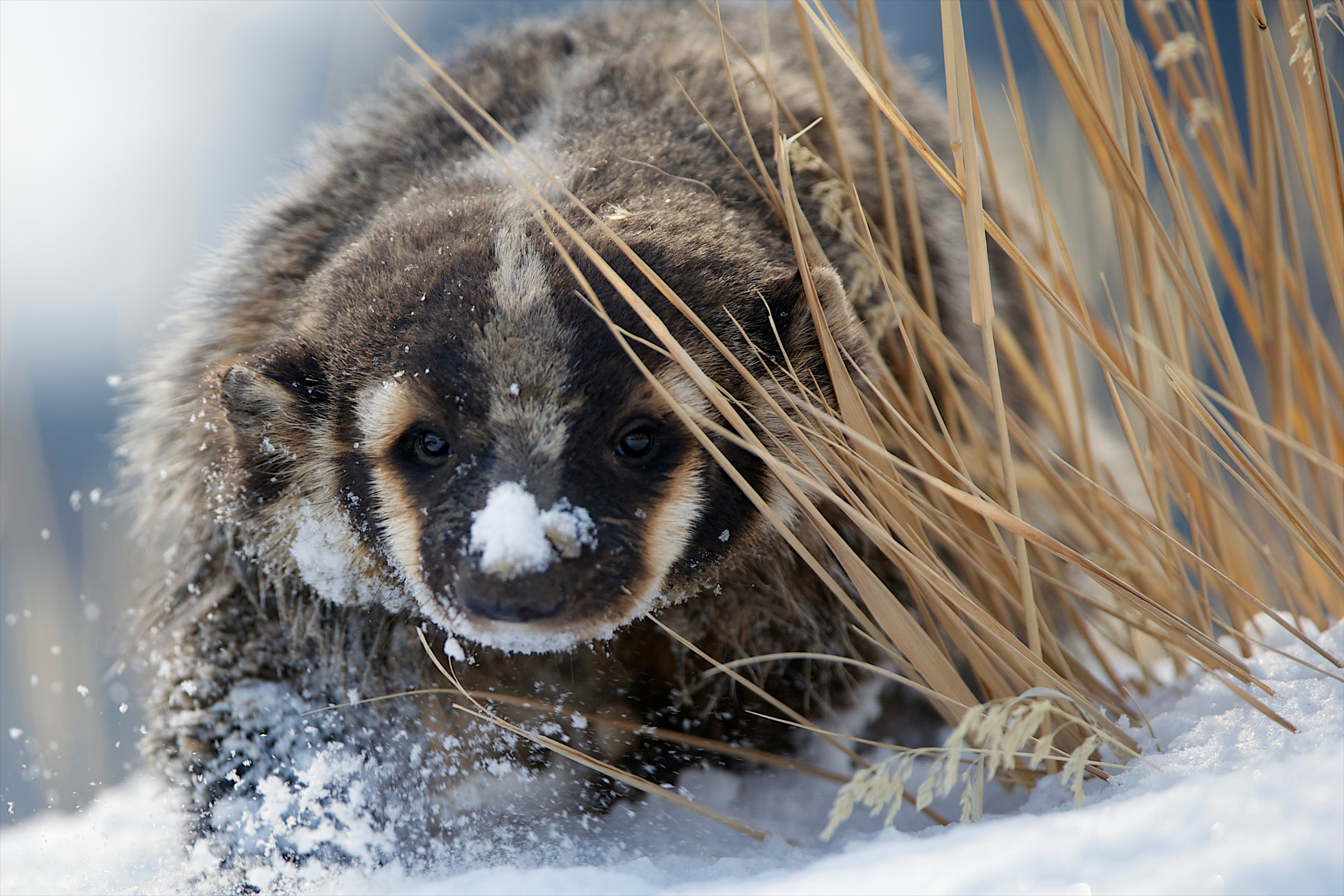 The week in wildlife in pictures in 2020 Wildlife