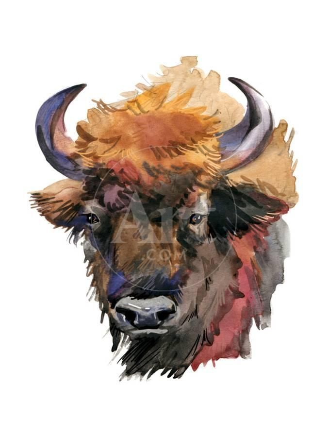 Bison Forest Animal Watercolor Illustrationby Faenkova Elena In