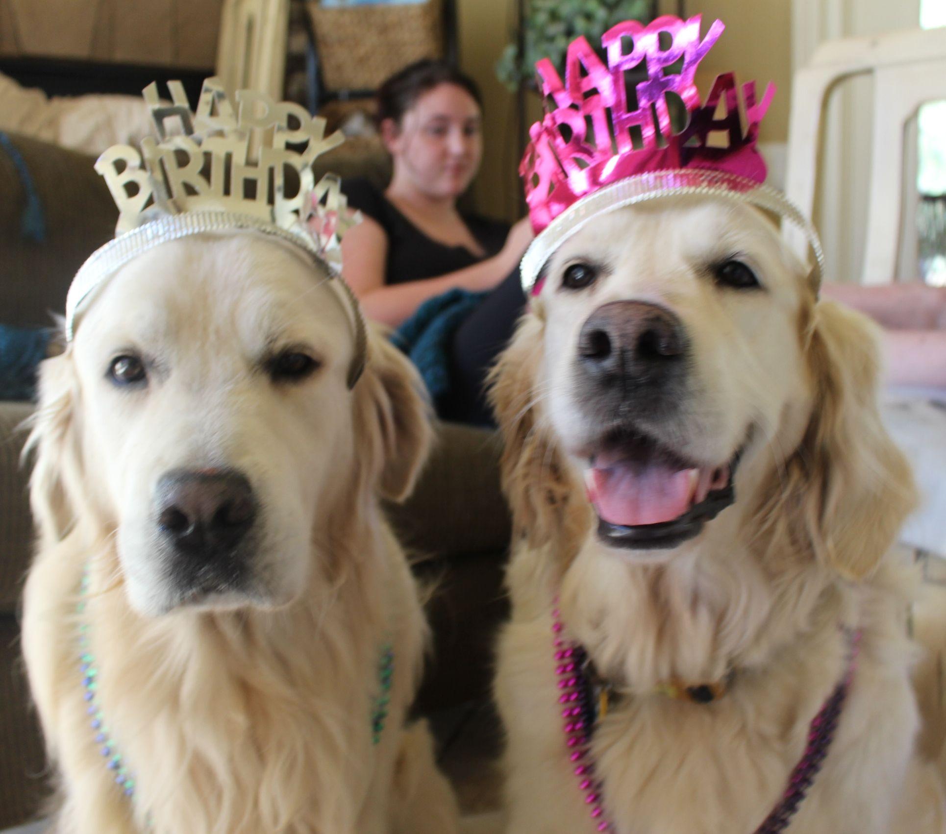 Golden Retriever Birthday Party Labradoodle Puppy English