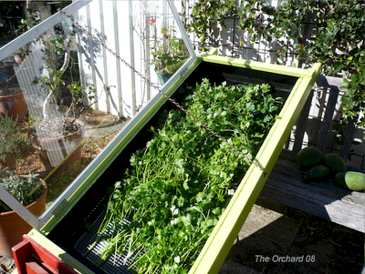 Herb drying Contraption. It works very well for drying fruits, vegetables and herbs. Solar power in action.