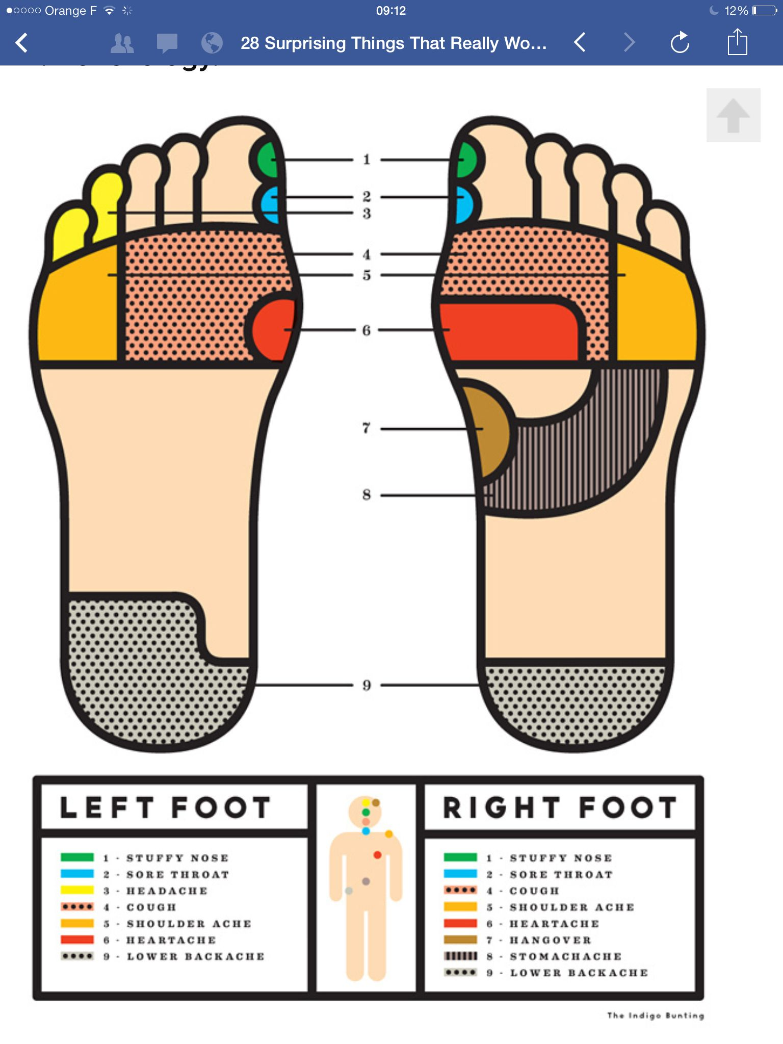 Pin by Jackie Rice on Cabins Reflexology, Foot