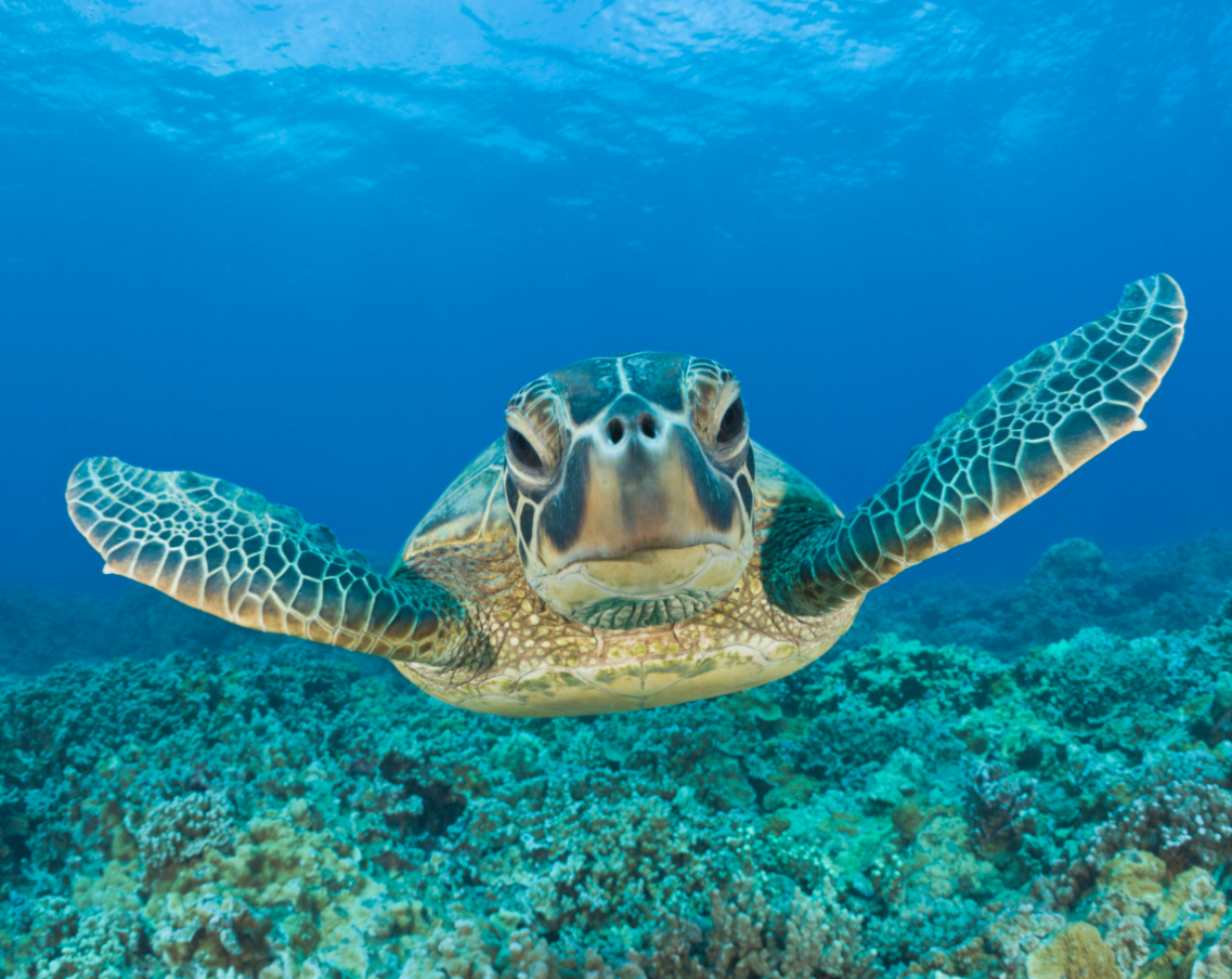 Coolest UpClose Animal Encounters Sea turtle wallpaper