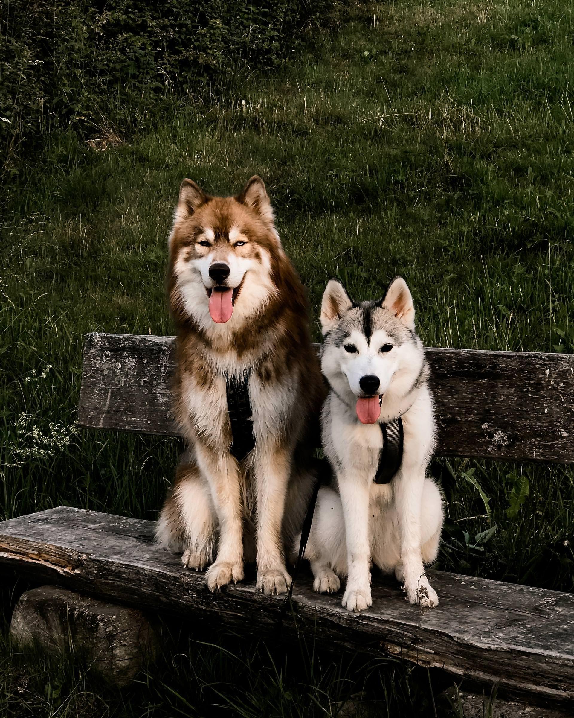 Unser Alltag und Leben mit Hund und Welpe, Sibirischer
