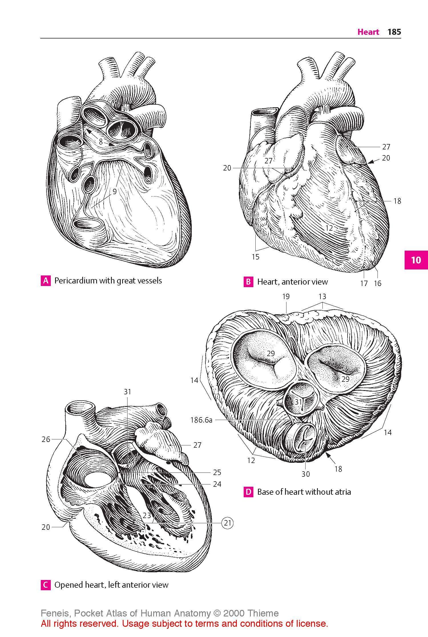 4th edition human anatomy edition human