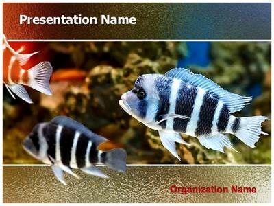 Zebra fish powerpoint template is one of the best powerpoint zebra fish powerpoint template is one of the best powerpoint templates by editabletemplates toneelgroepblik Images