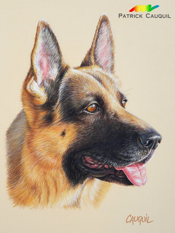Patrick Cauquil artiste peintre animalier   Peintre animalier, Dessin chien, Berger allemand