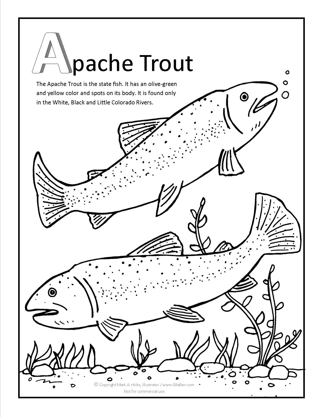 Apache Trout Coloring page at GilaBen.com | Arizona Coloring Pages ...