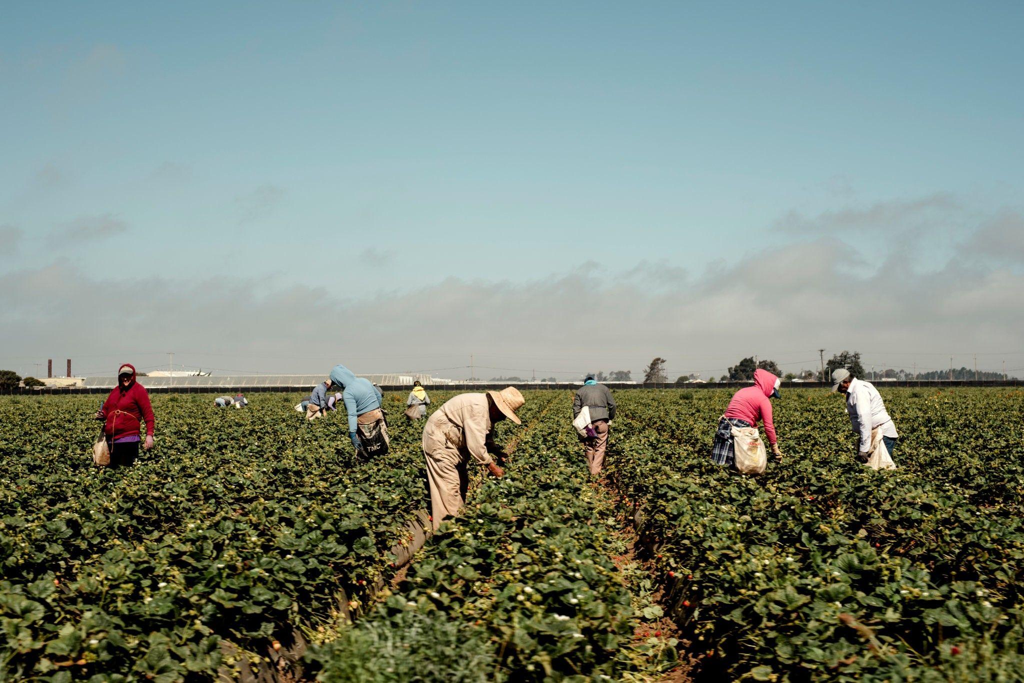 Pesticide studies won epas trust until trumps team